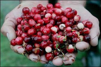 قائمة الفواكه Bilberry