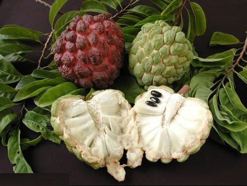فوائد فاكهة القشطة شبكة الشفاء العالمية