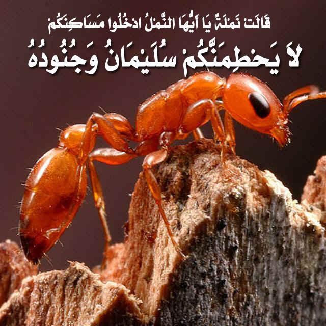 النمل يتحطم: معجزة قرآنية Image009