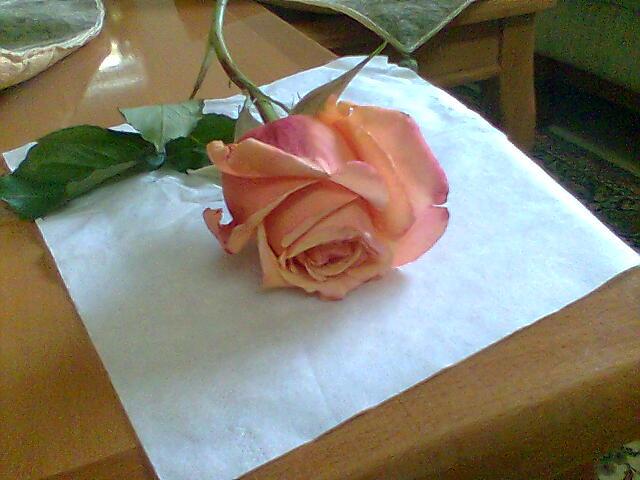 شوف الزهور بقى وإتعلّم .. ! 15694394934719393784