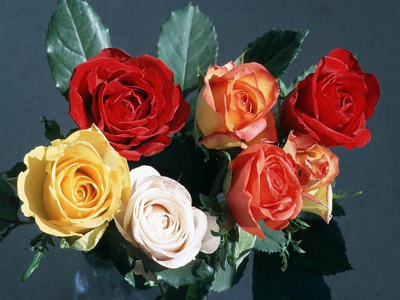 شوف الزهور بقى وإتعلّم .. ! 25150787528963739026