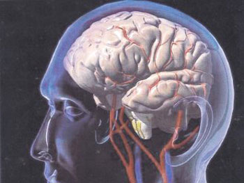 الخلايا العصبية 2014,2015 446p.jpg