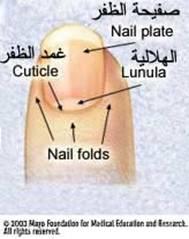 وضعك الصحي أظافرك ........................... nail1.jpg
