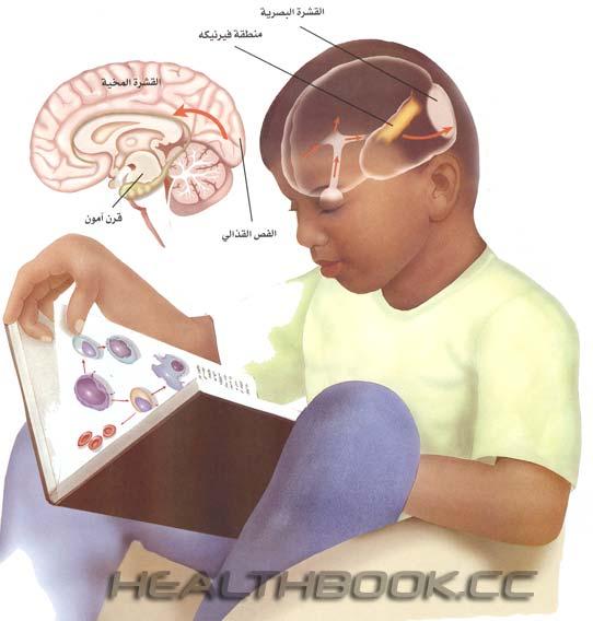 هل تعلم كيف تقرأ و تتذكر ؟ Ashefaa-003