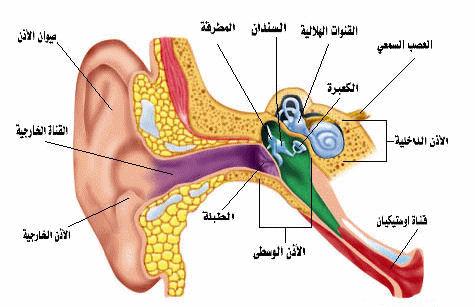 بحث عن طنيين الأذن أسبابة والعلاج