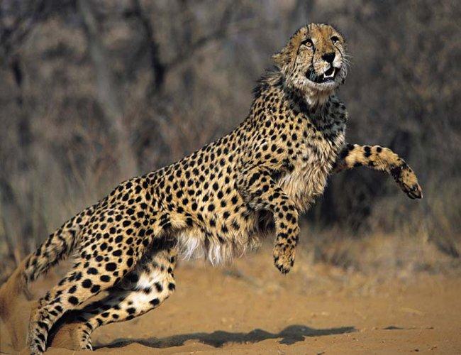 18 احلى صور النمر   Best Photos Tiger