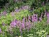 صور الطبيعة والجبال: 10_100x75