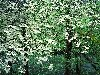 صور الطبيعة والجبال: 12_100x75