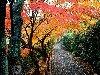 صور الطبيعة والجبال: 14_100x75