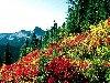 صور الطبيعة والجبال: 16_100x75