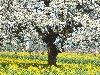 صور الطبيعة والجبال: 8_100x75