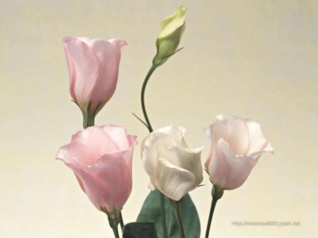 Цветы список с картинками 1