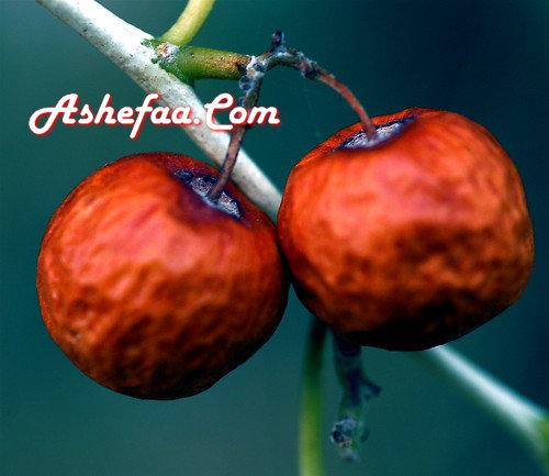 صورة فاكهة السدر